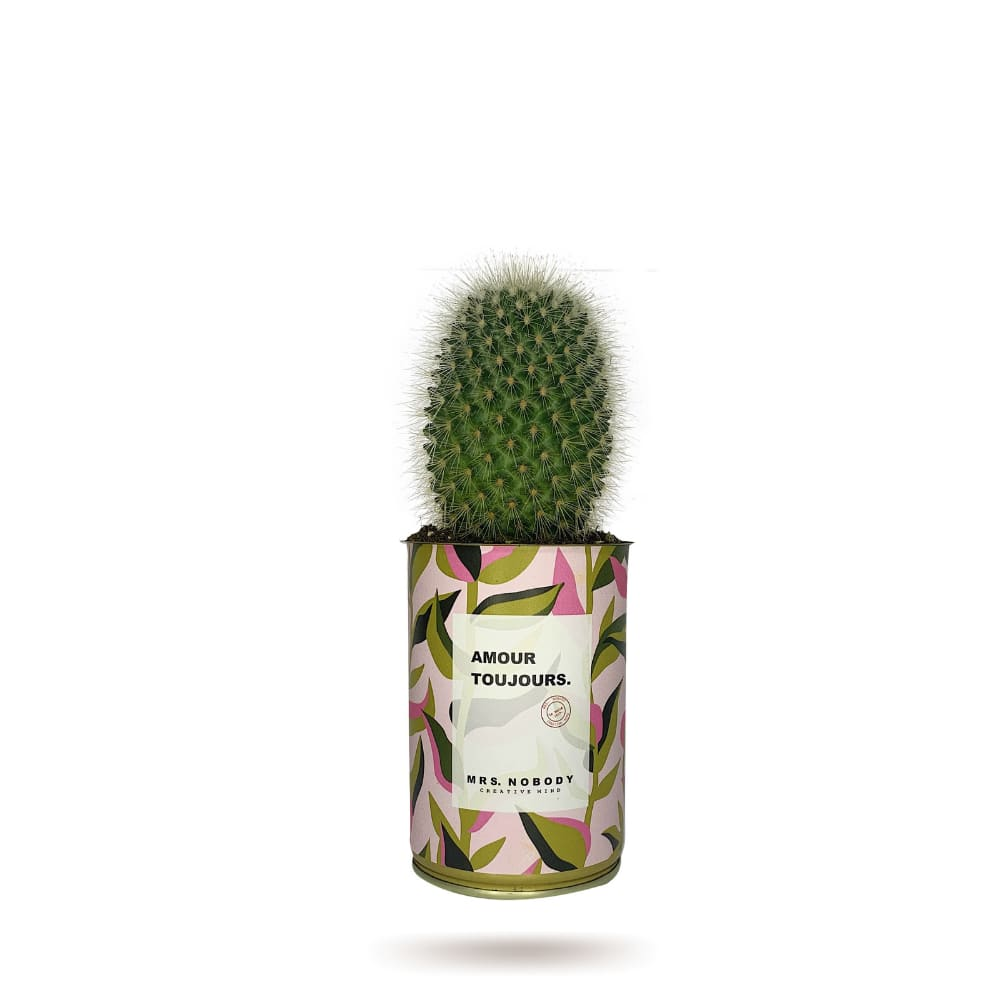 Cactus ou Succulente - Amour Toujours - Cactus Boule