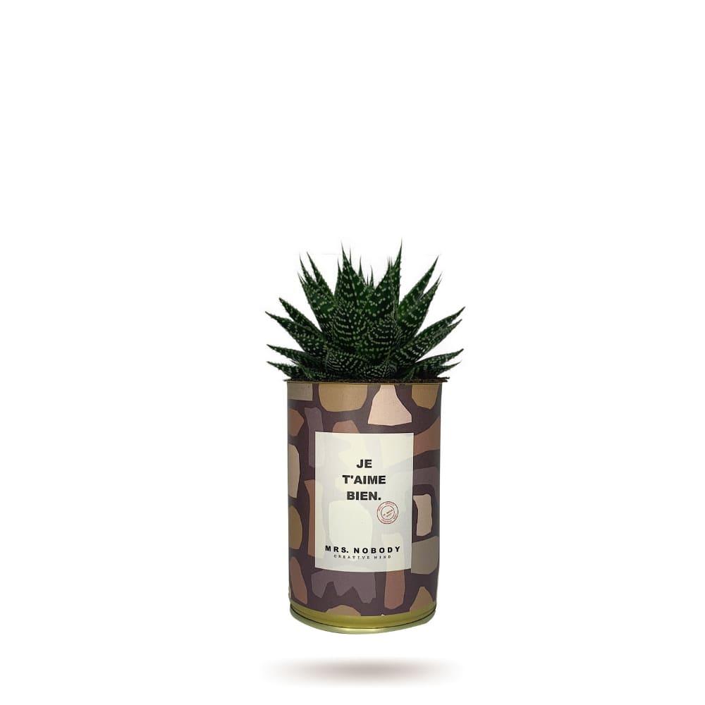 Cactus ou Succulente - Je T'aime Bien - Aloe