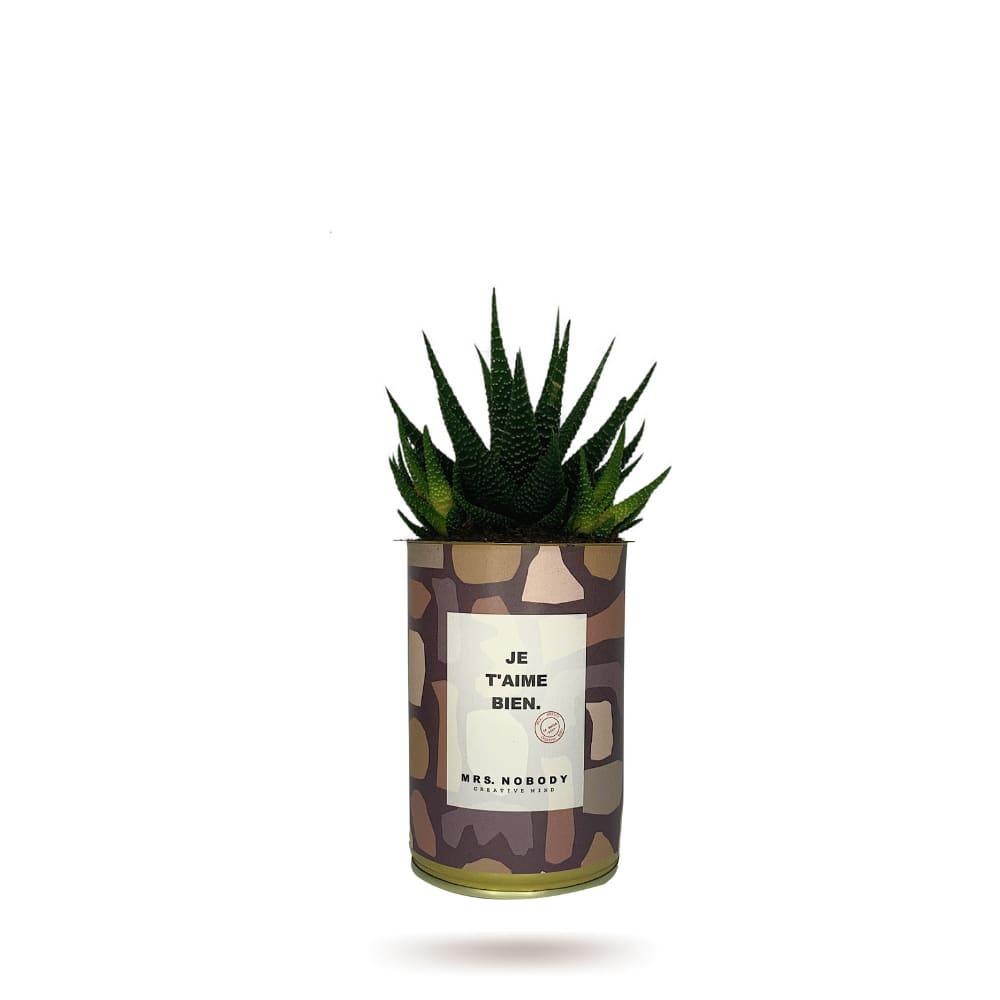 Cactus ou Succulente - Je T'aime Bien - Haworthia