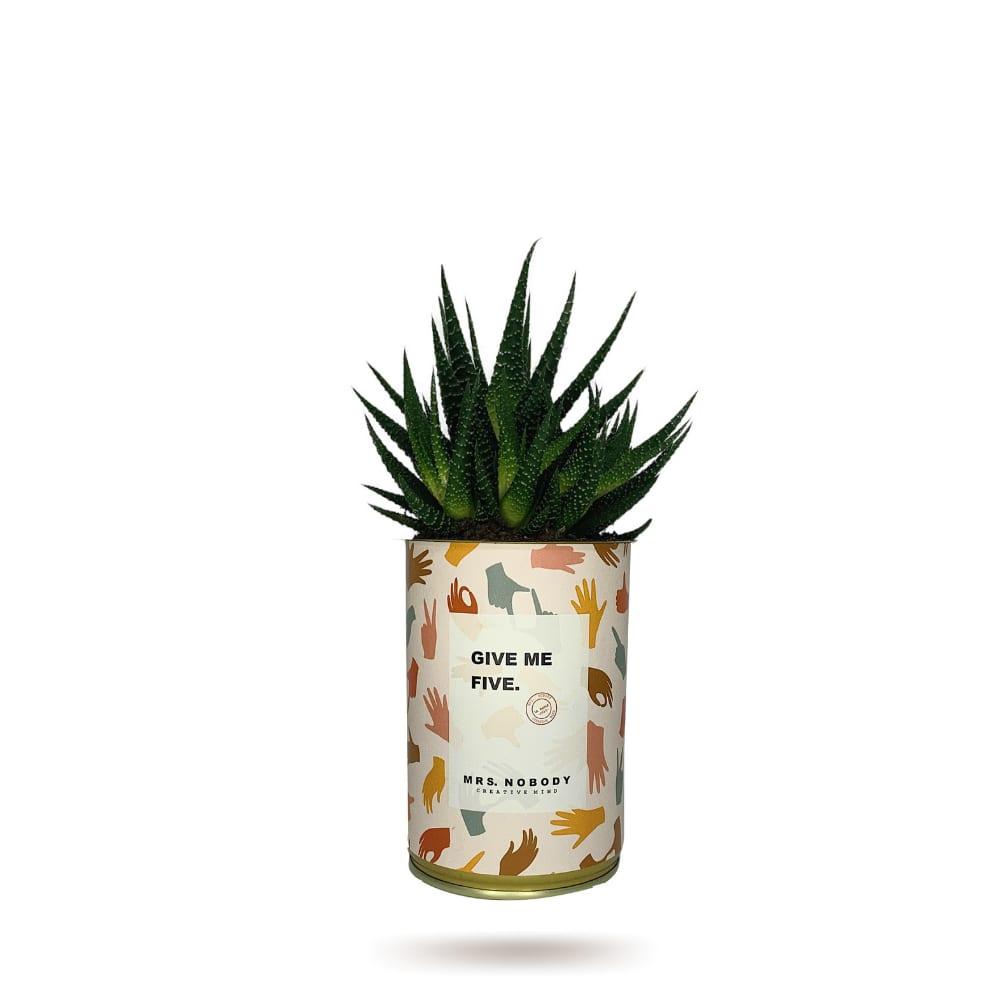 Cactus ou Succulente - Give Me Five - Haworthia