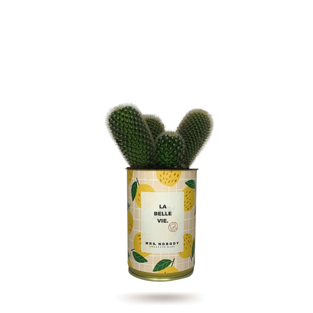 Cactus ou Succulente - La Belle Vie - Cactus Colonne