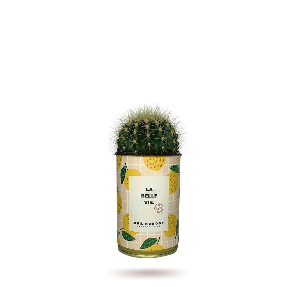 Cactus ou Succulente - La Belle Vie - Cactus Boule
