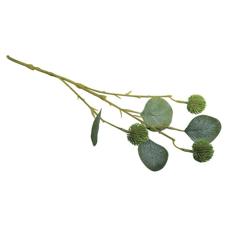 Branche d'eucalyptus avec fruits