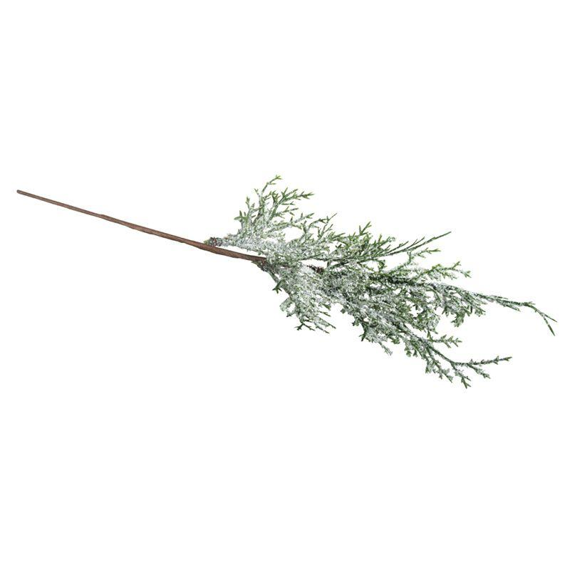 Branche de thuya enneigée
