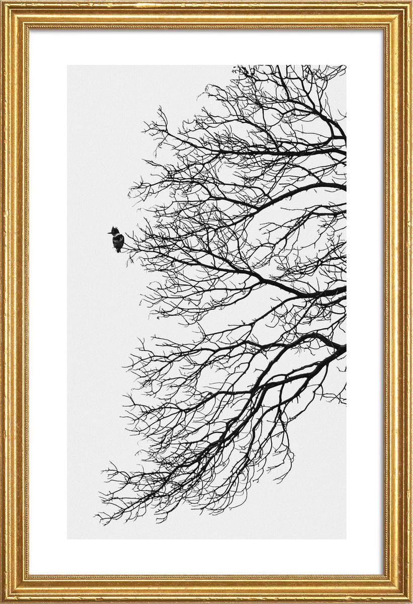Affiche avec cadre en bois (Doré) en Blanc & Gris/60x90
