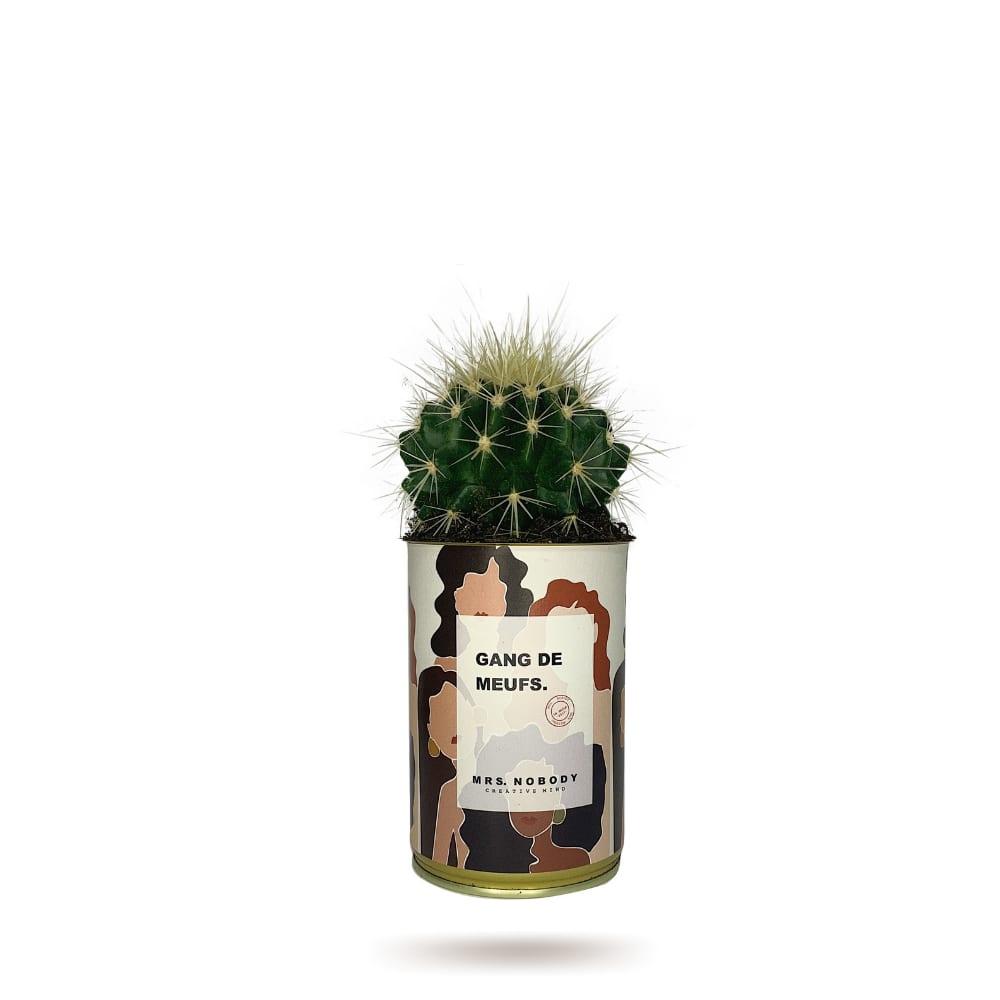 Cactus ou Succulente - Gang De Meufs - Cactus Boule