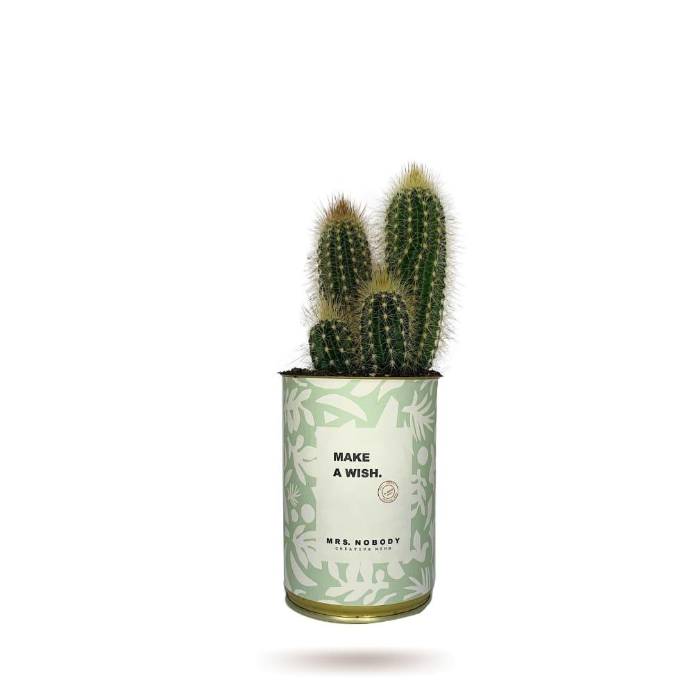 Cactus ou Succulente - Make A Wish - Cactus Colonne