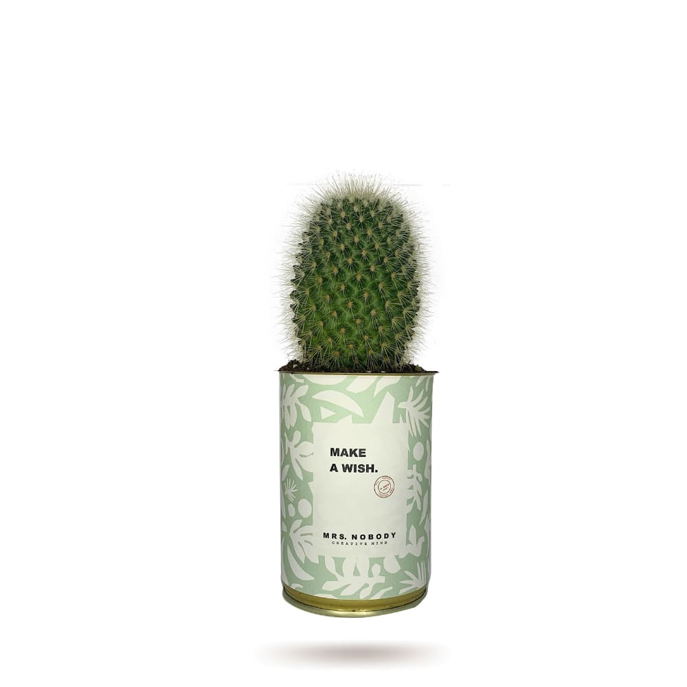 Cactus ou Succulente - Make A Wish - Cactus Boule