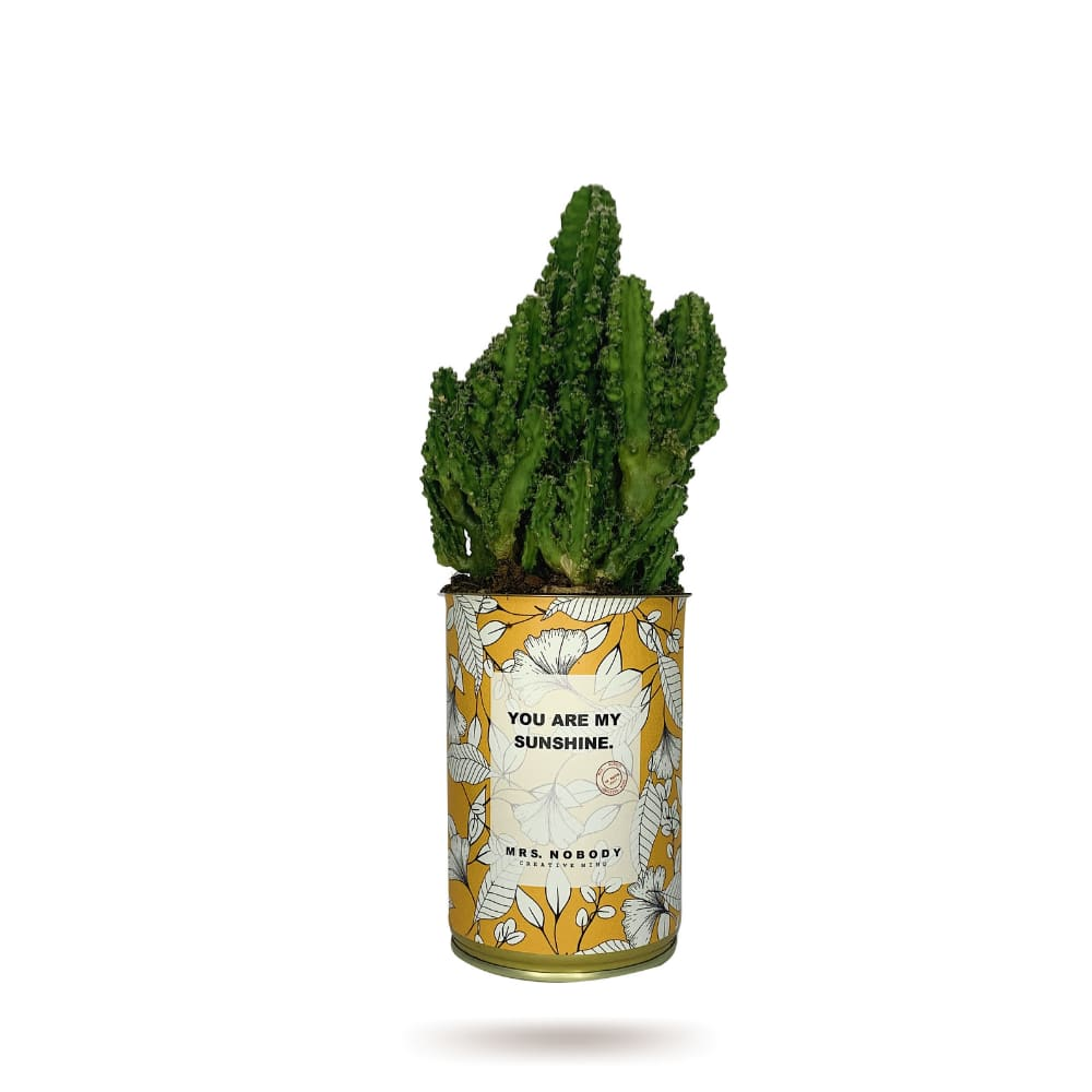 Cactus ou Succulente - You Are My Sunshine - Cactus Colonne