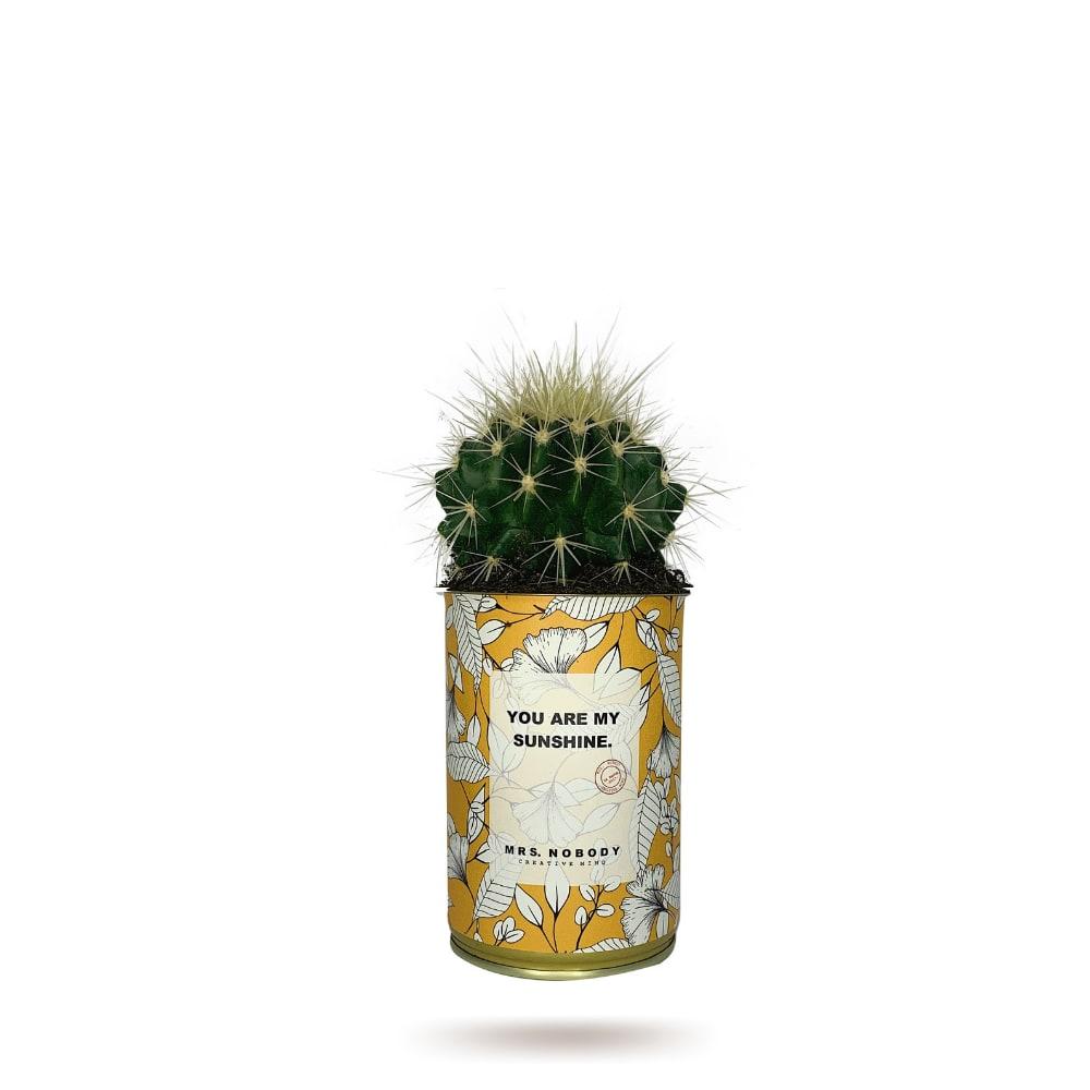 Cactus ou Succulente - You Are My Sunshine - Cactus Boule