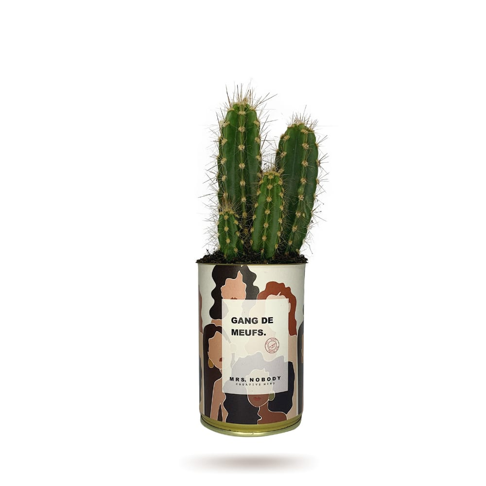 Cactus ou Succulente - Gang De Meufs - Cactus Colonne