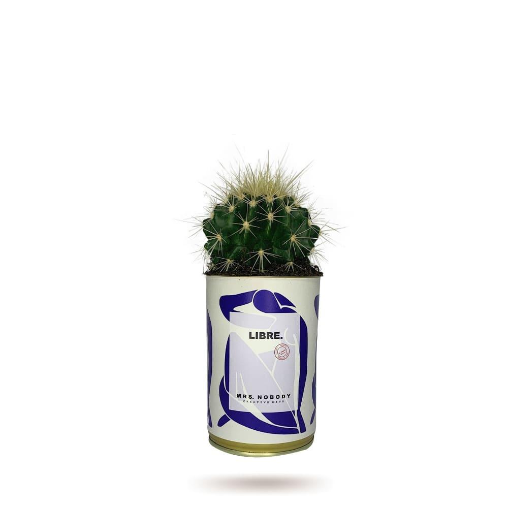 Cactus ou Succulente - Libre - Cactus Boule