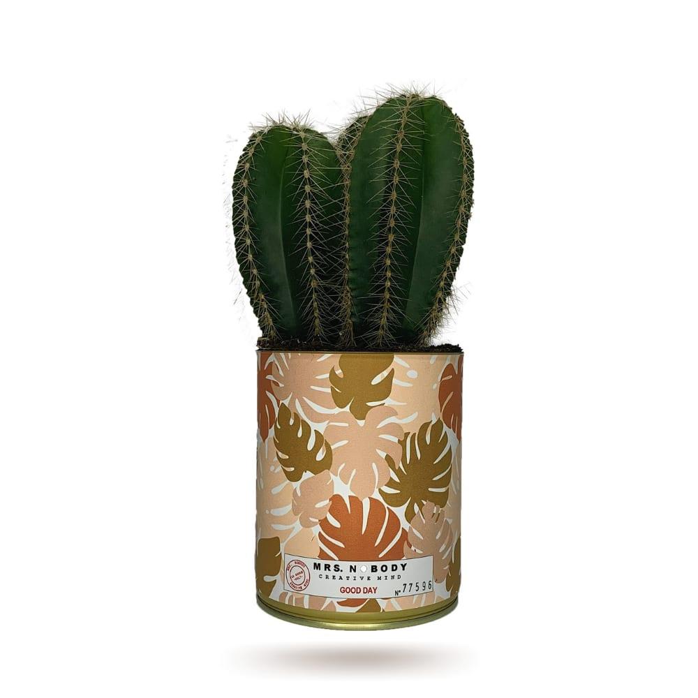 Cactus ou Succulente - Good Day - Cactus Colonne