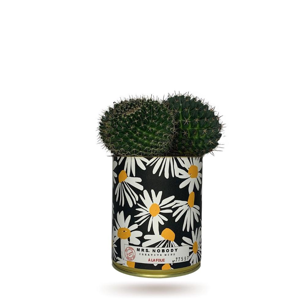 Cactus ou Succulente - À La Folie - Cactus Boule