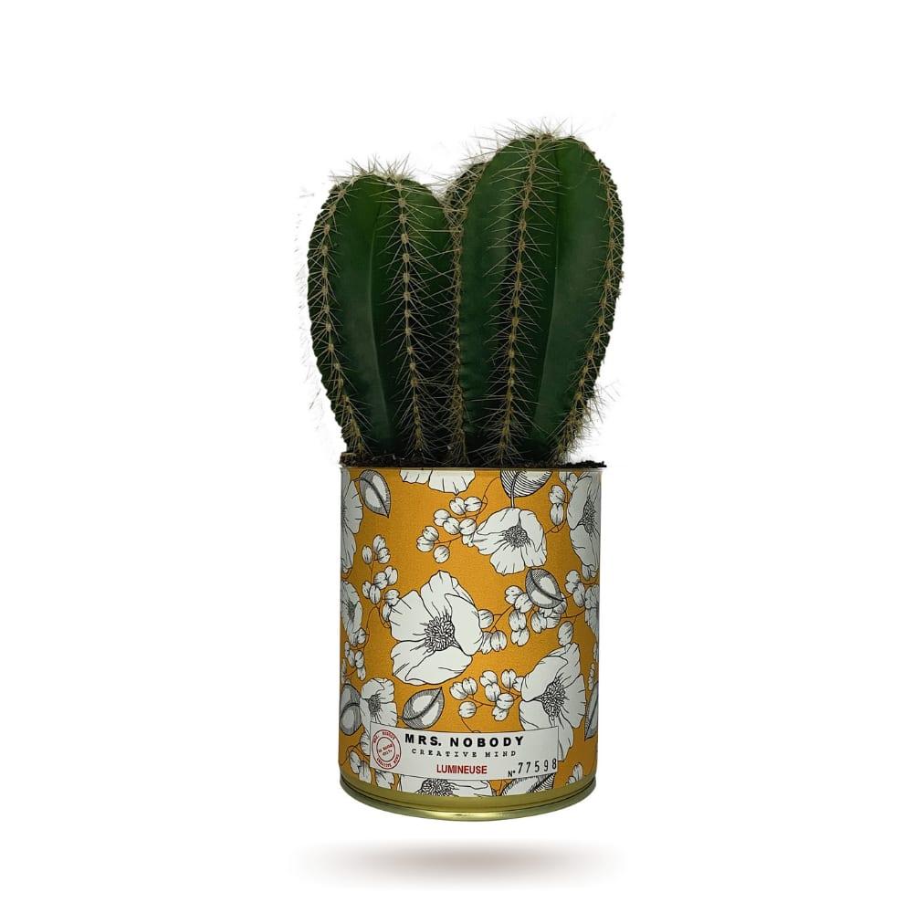 Cactus ou Succulente - Lumineuse - Cactus Colonne
