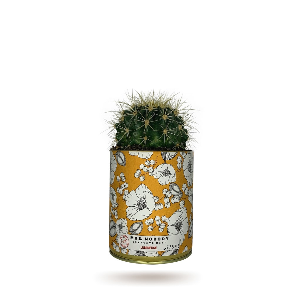 Cactus ou Succulente - Lumineuse - Cactus Boule