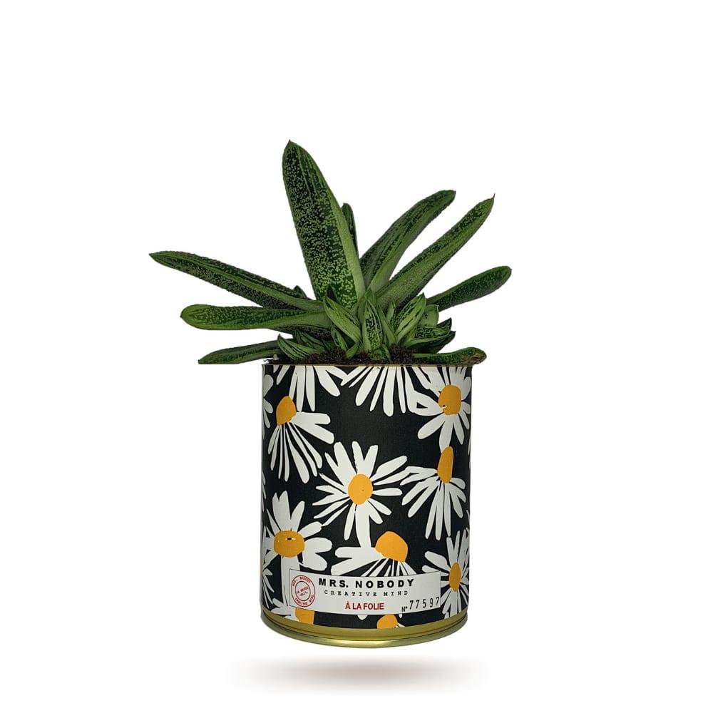 Cactus ou Succulente - À La Folie - Aloe