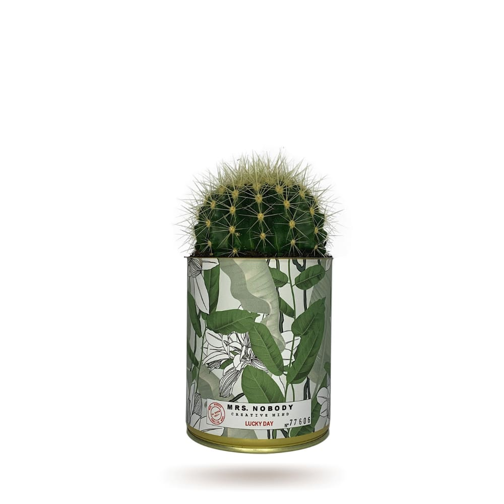 Cactus ou Succulente - Lucky Day - Cactus Boule