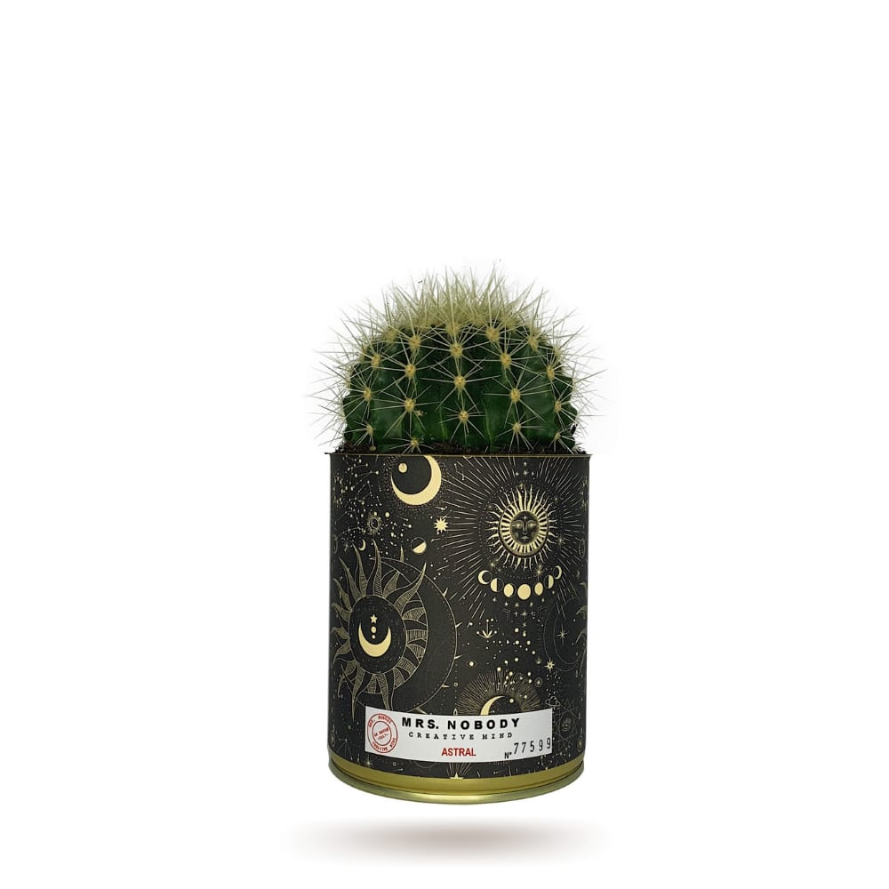 Cactus ou Succulente - Astral - Cactus Boule