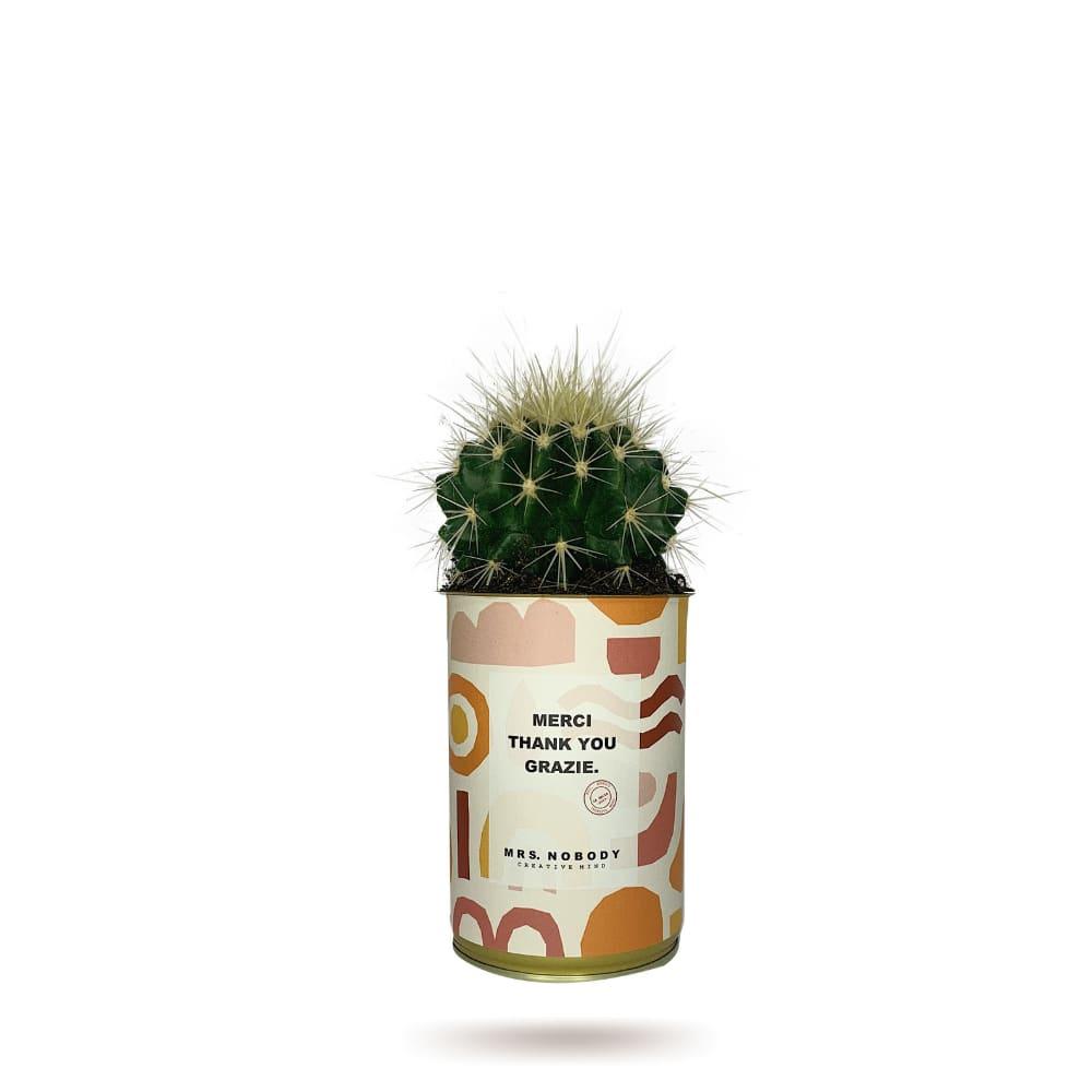 Cactus ou Succulente - Merci Thank You Grazie - Cactus Boule