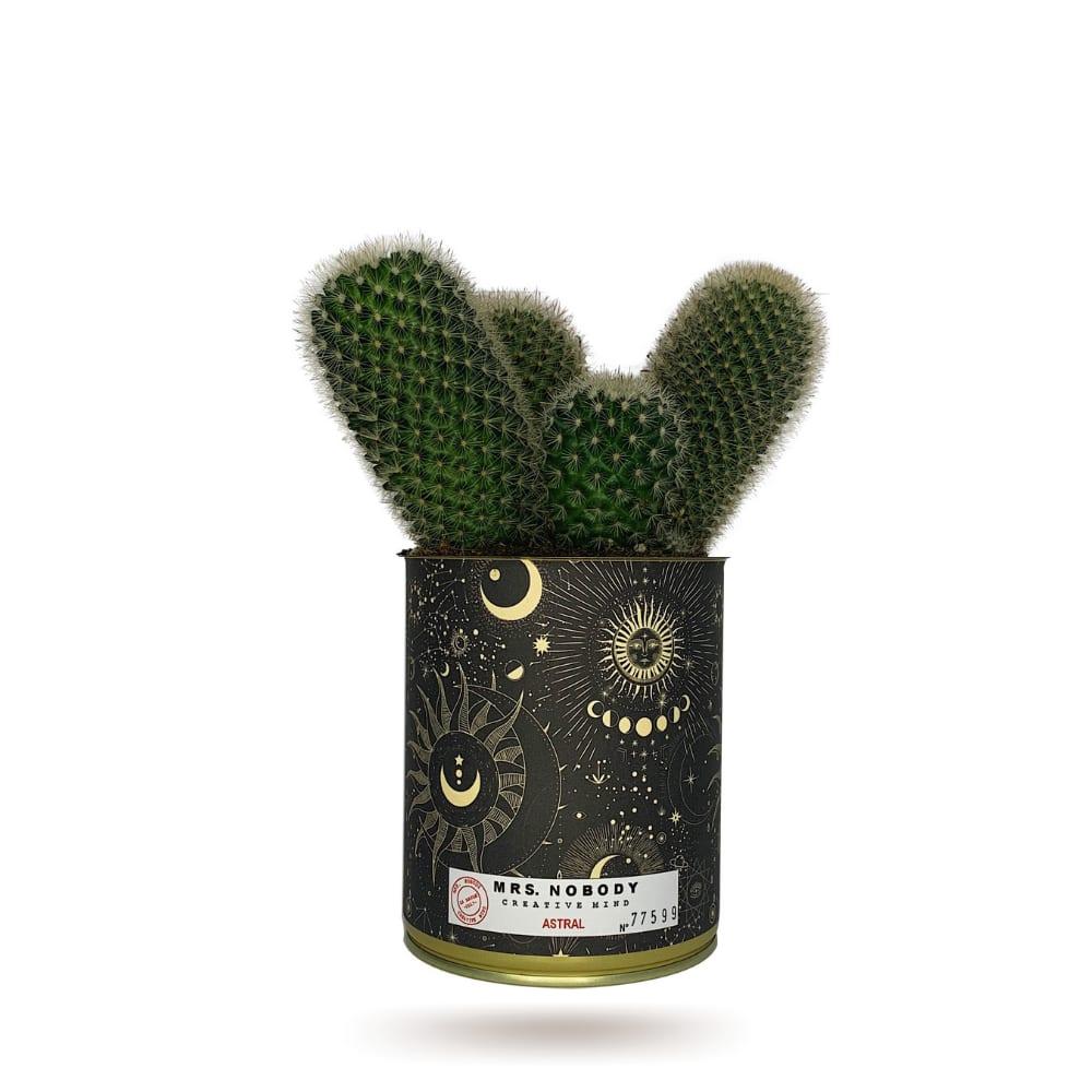 Cactus ou Succulente - Astral - Cactus Colonne