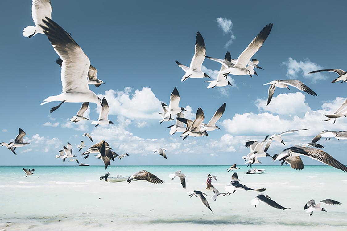 Photographie d'art des BestJobers 40x60 cm sur alu