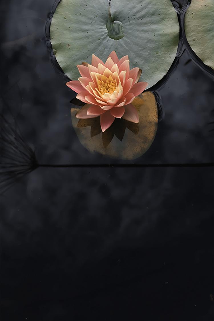 Photographie d'art de Zoé Pignolet 40x60 cm sur plexi