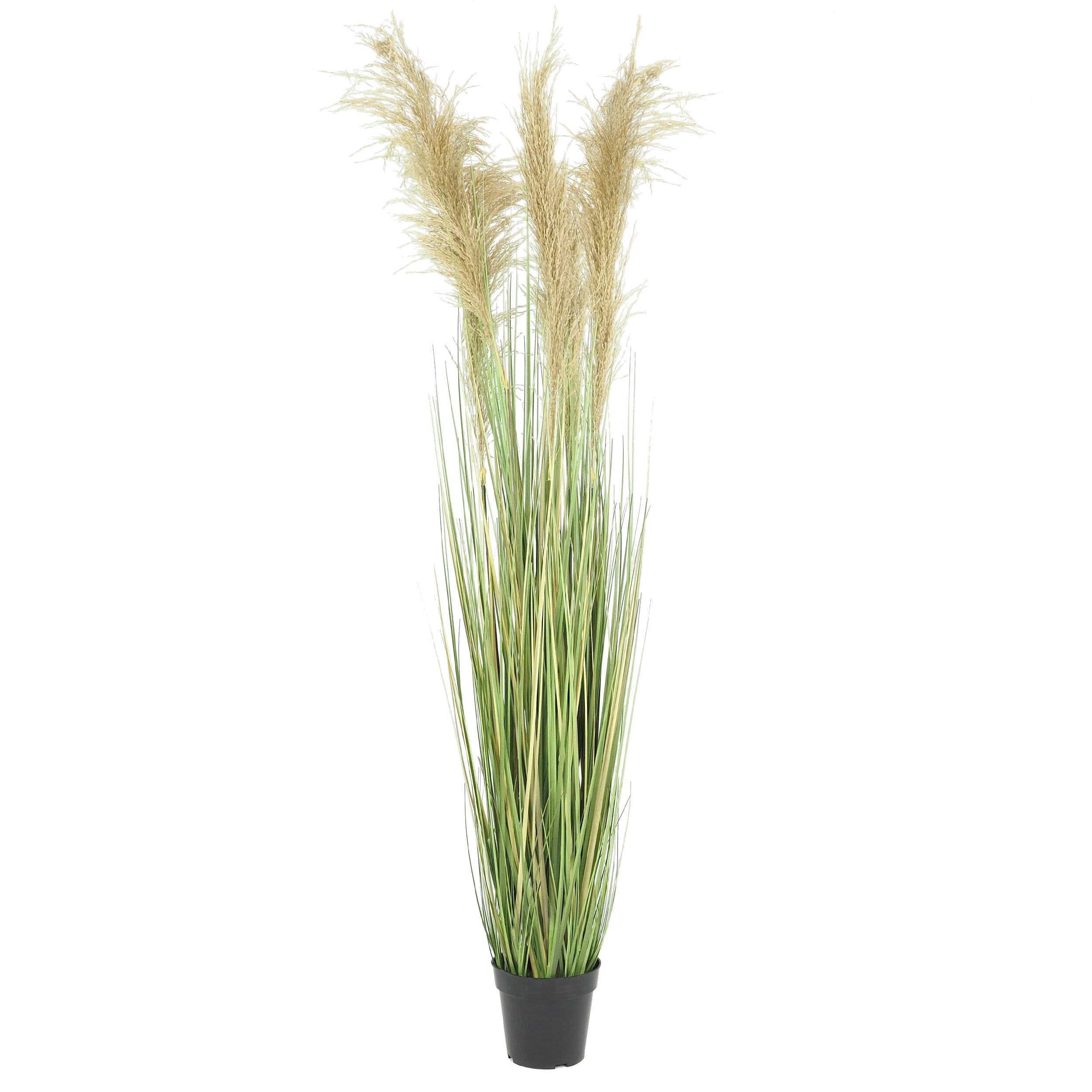 Herbe de la pampa plumeaux naturels tiges artificielles 150 cm
