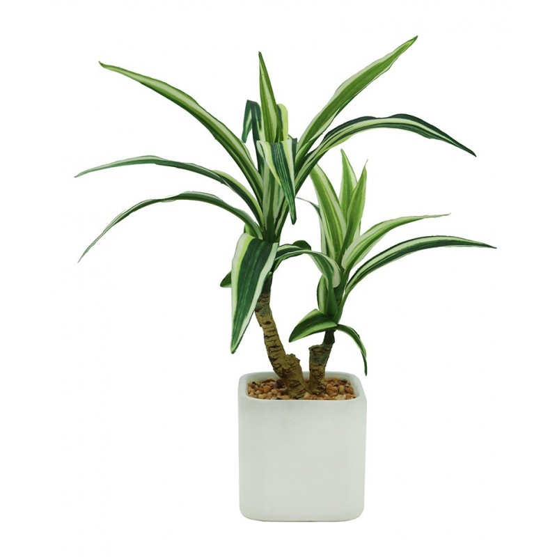 Dracaena artificiel en pot céramique carré blanc mat 29cm