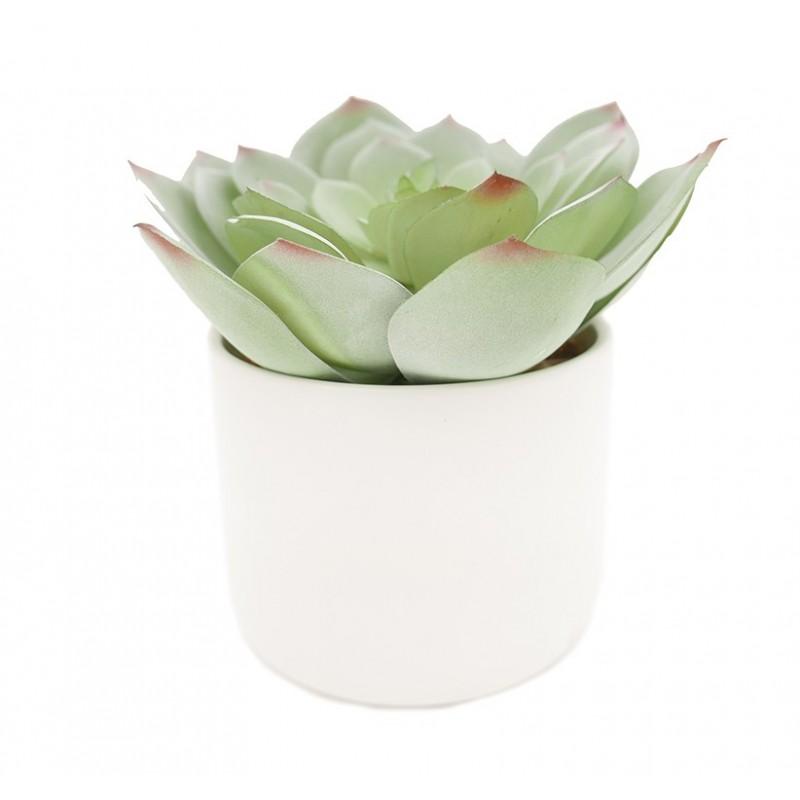 Succulente echeveria/chou artificielle pot céramique blanc 17cm