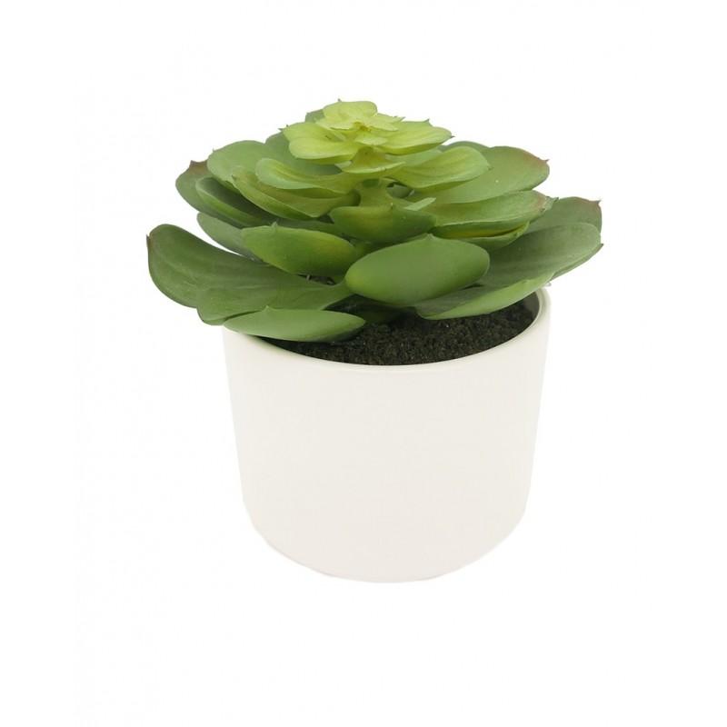Succulente echeveria/chou artificielle pot céramique blanc 15cm