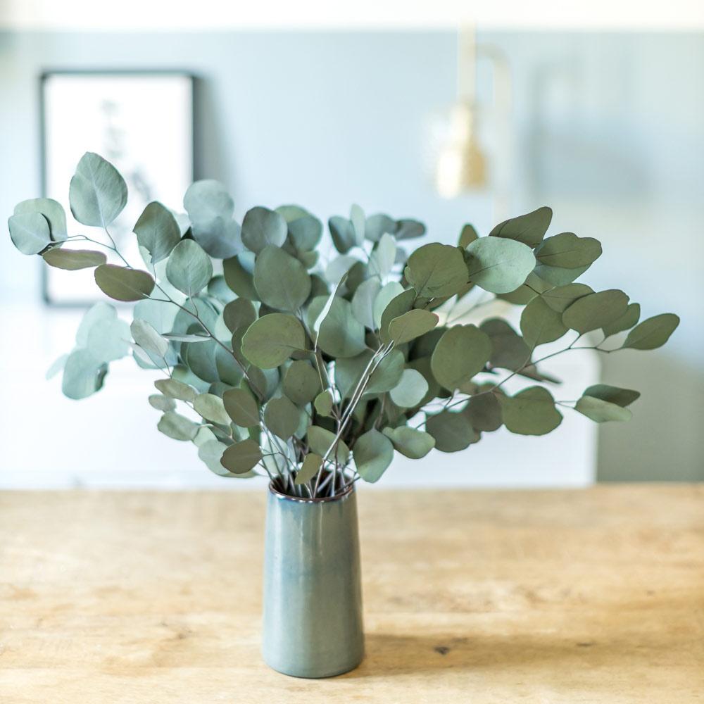 Botte de fleurs séchées eucalyptus populus vert stabilisé