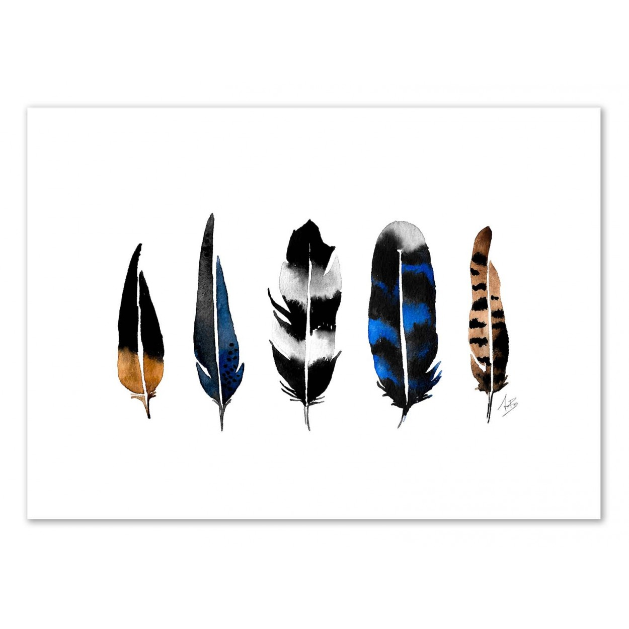 NORTHERN FEATHERS -   Affiche d'art 50 x 70 cm