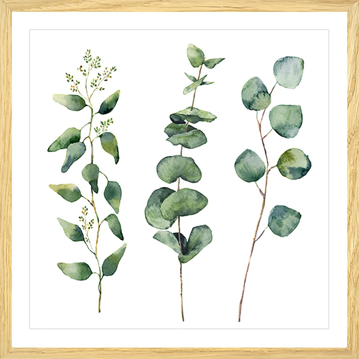 Affiche aquarelle eucalyptus Affiche sous cadre bois