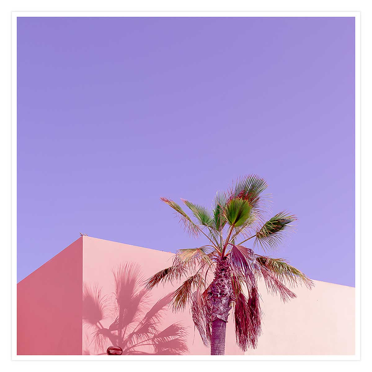 Affiche photo pink palma Affiche seule