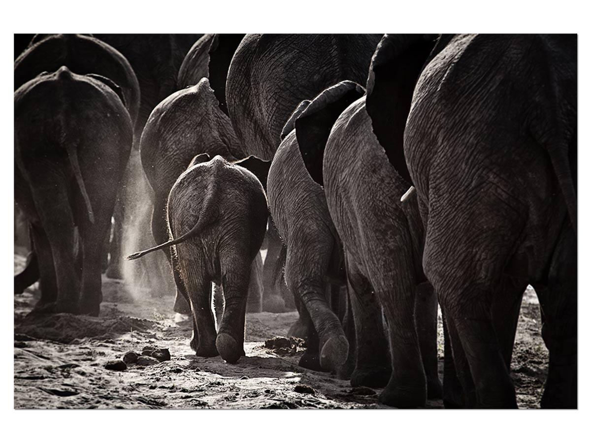 Tableau animaux cap afrique Tableau alu Dibond