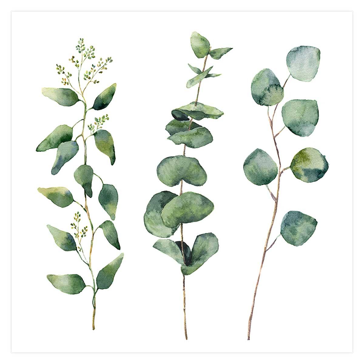 Affiche aquarelle eucalyptus Affiche seule