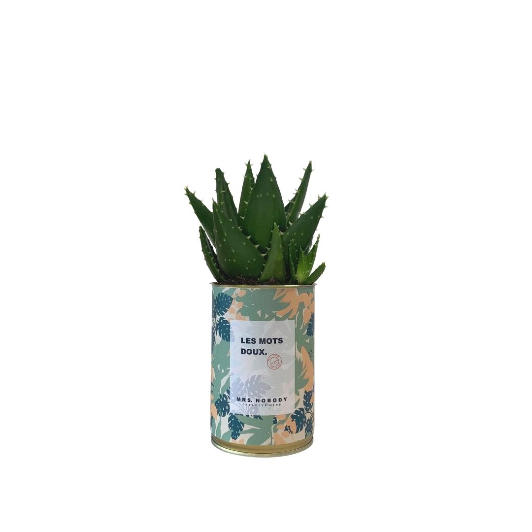 Cactus ou Succulente - Les Mots Doux - Aloe