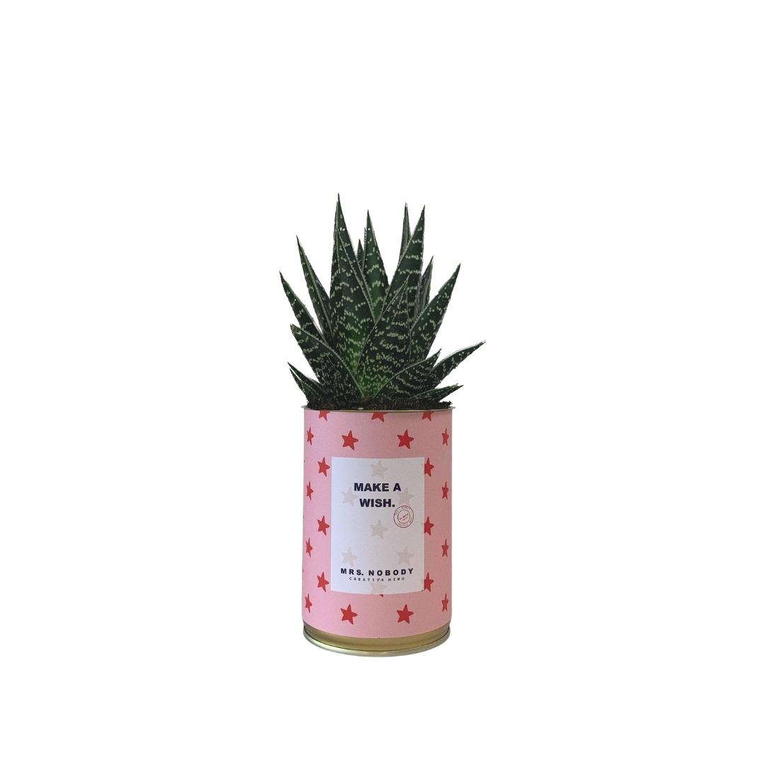 Cactus ou Succulente - Make A Wish - Aloe