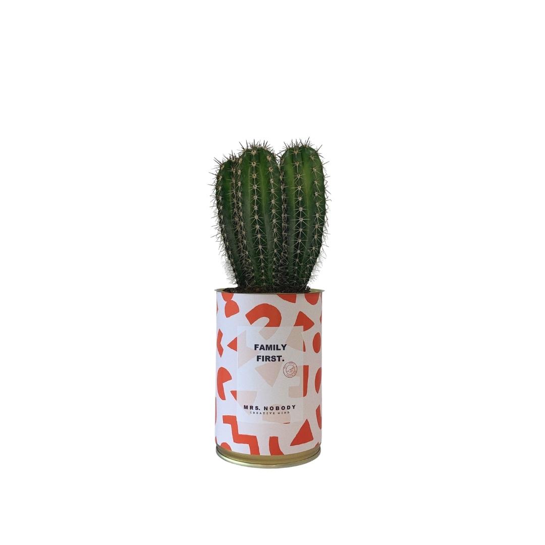 Cactus ou Succulente - Family First - Cactus Colonne