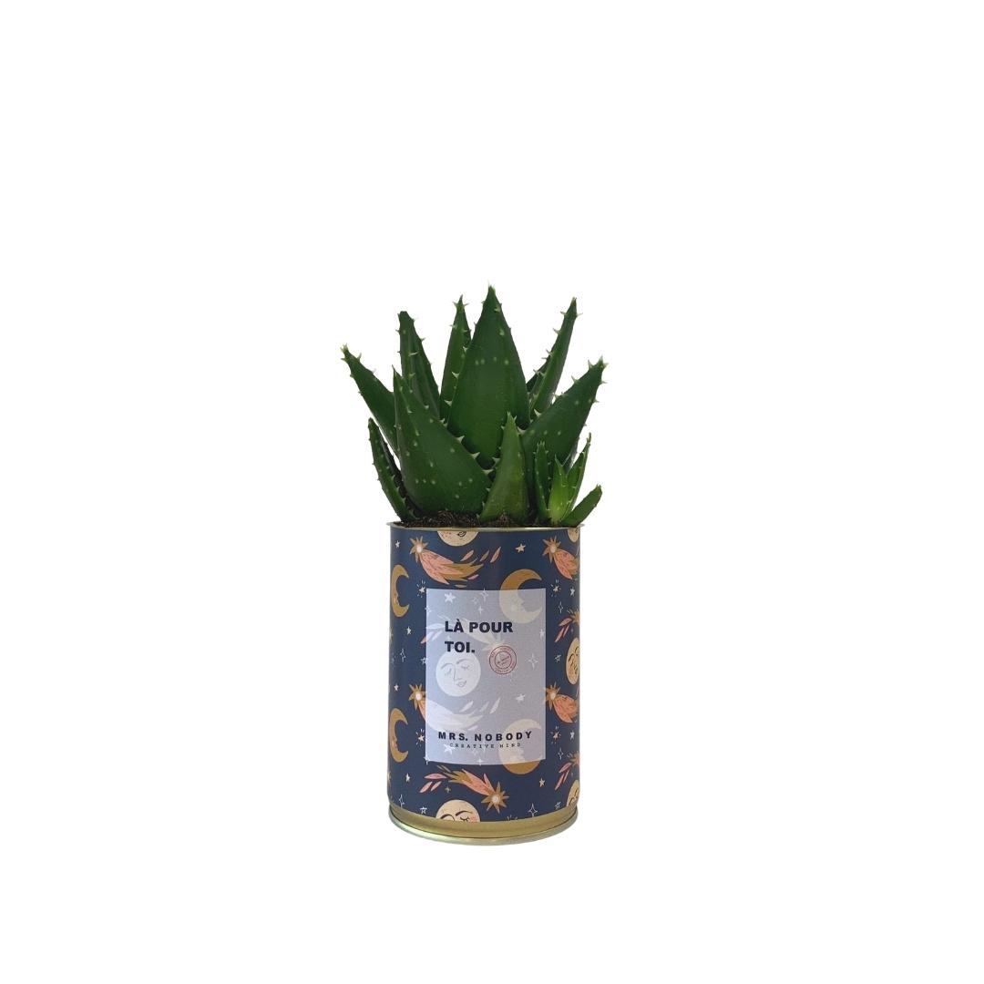 Cactus ou Succulente - Là Pour Toi - Aloe