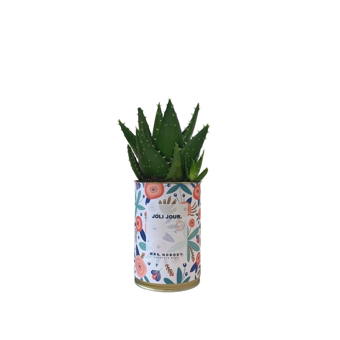 Cactus ou Succulente - Joli Jour - Aloe