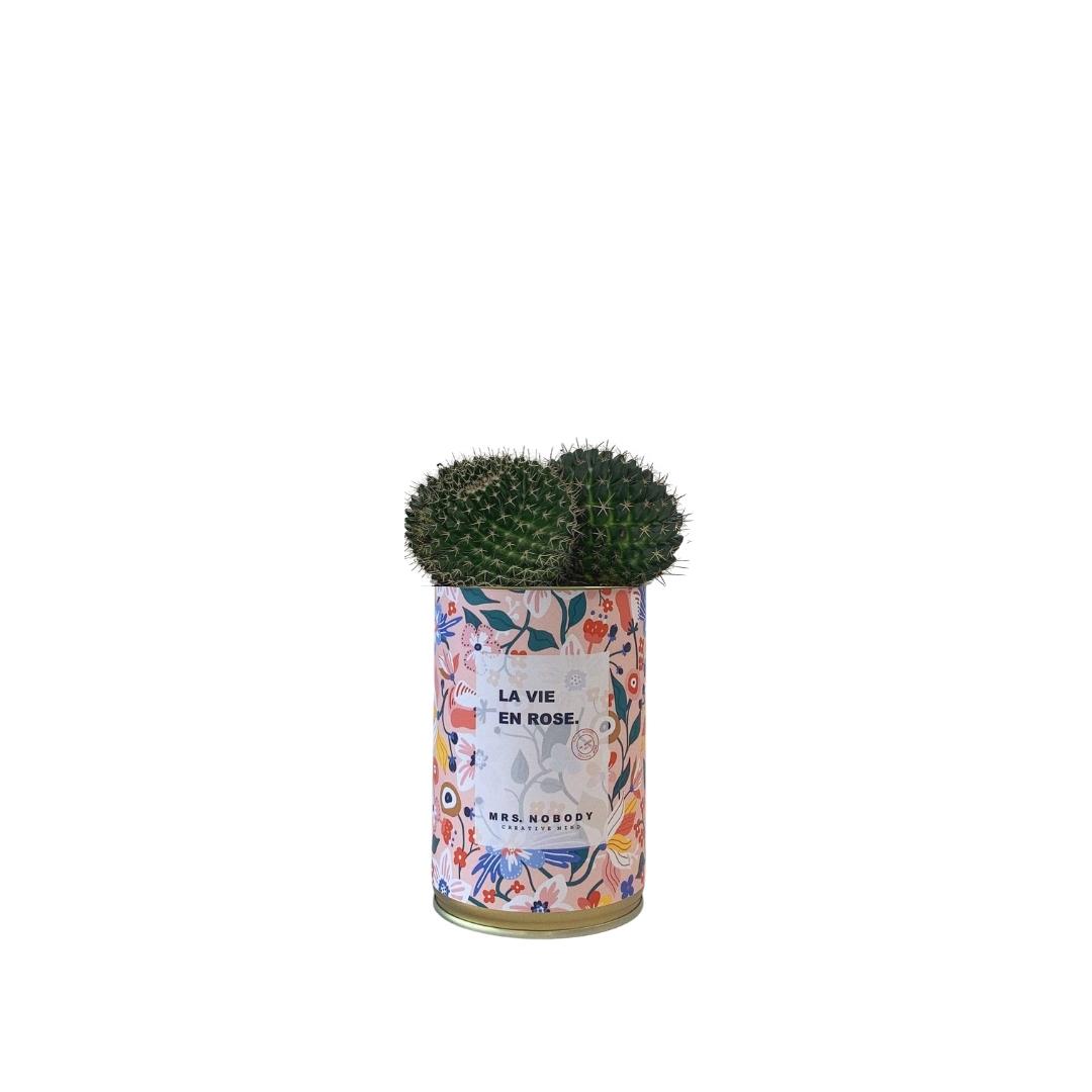 Cactus ou Succulente - La Vie En Rose - Cactus Boule