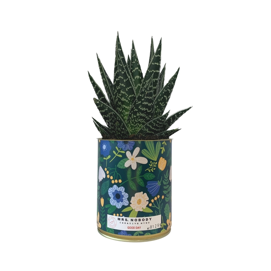 Cactus ou Succulente - Good Day - Aloe