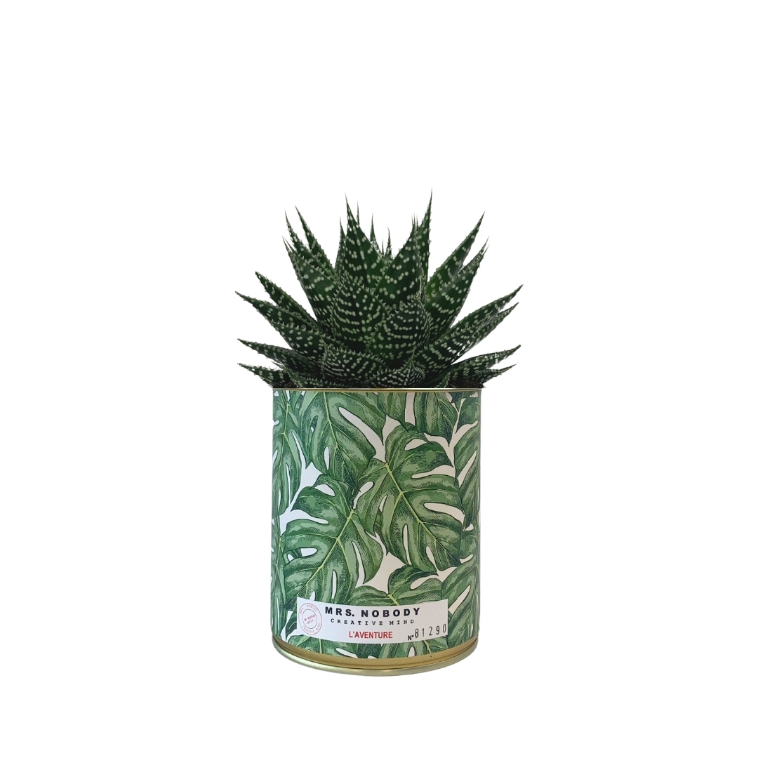 Cactus ou Succulente - L'Aventure - Aloe