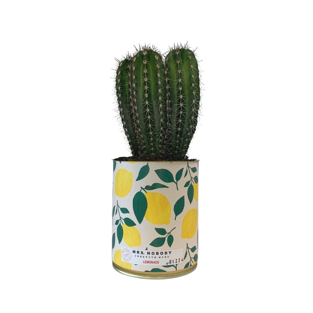 Cactus ou Succulente - Lemonade - Cactus Colonne