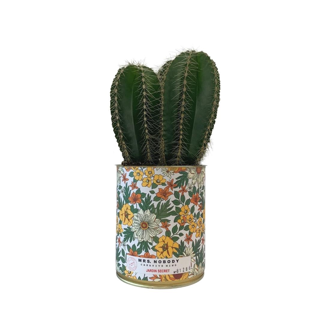 Cactus ou Succulente - Jardin Secret - Cactus Colonne