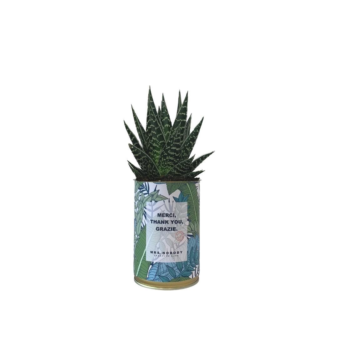 Cactus ou Succulente - Merci, Thank You, Grazie - Aloe