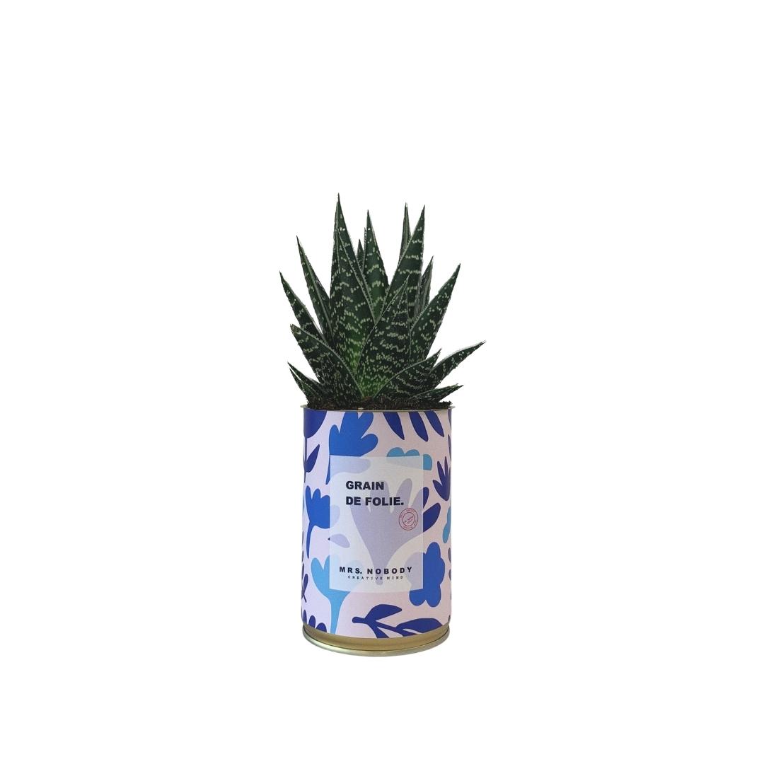 Cactus ou Succulente - Grain de Folie - Aloe