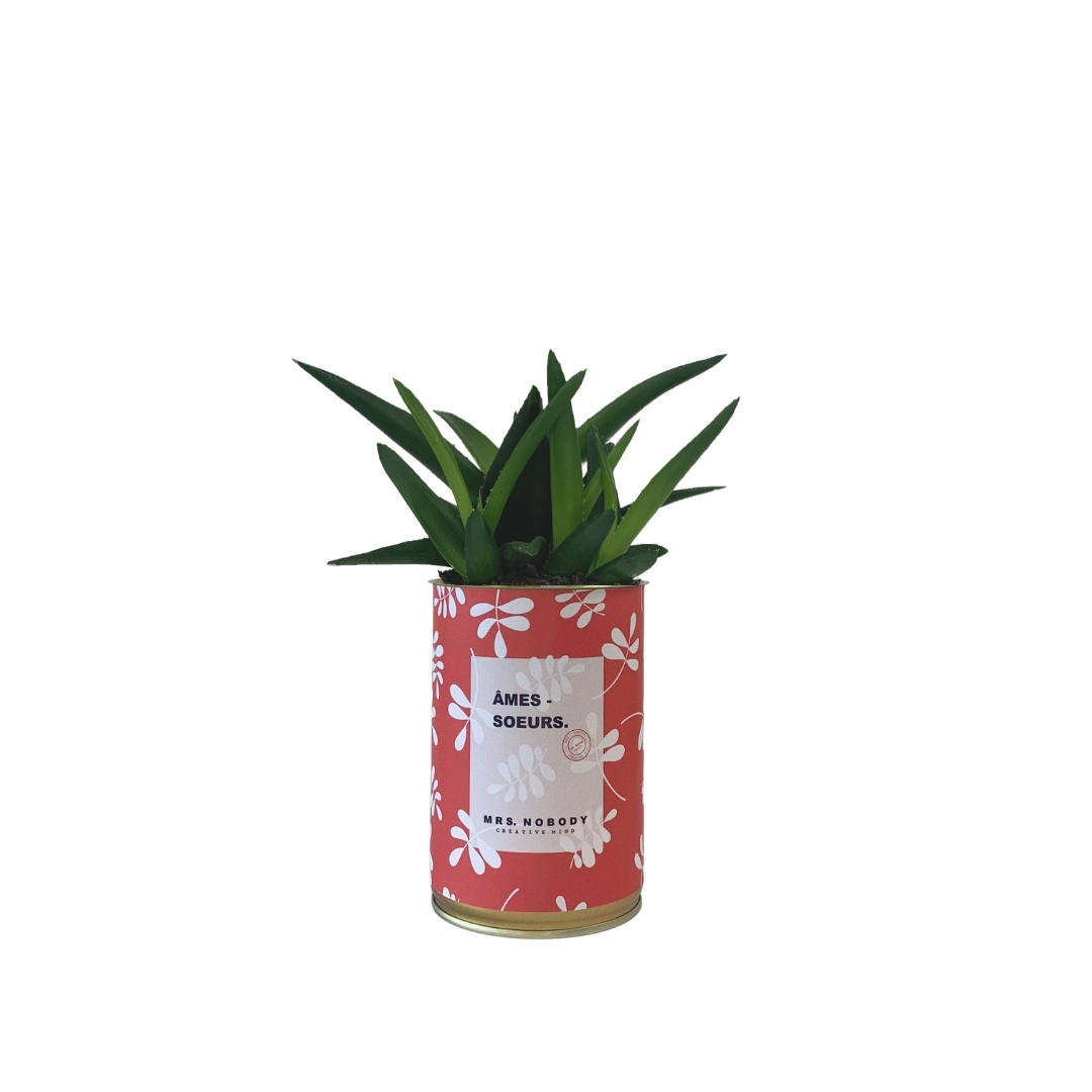 Cactus ou Succulente - Âmes-Sœurs - Haworthia